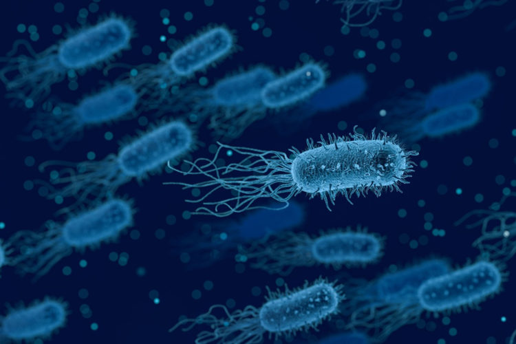 Legionelosis. Legionella.